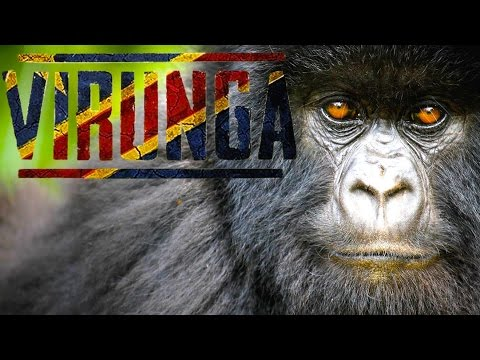 VIRUNGA - Congo Documentary on Nature in Peril with dir. Orlando von Einsiedel