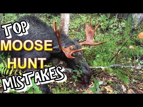 Top 5 Moose Hunting MISTAKES