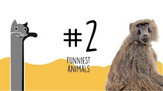 The Funniest ANIMALS Videos #2   Funny animal compilation   Watch & laugh!