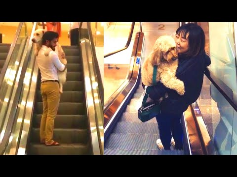 Dog Owners carrying their cute dogs on escalators | Scared dogs