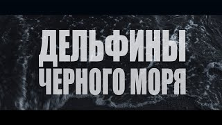 Дельфины Черного моря. Документальный фильм 2019 г.