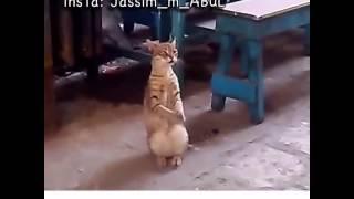 vuclip الام اذا شافت بنتها ترقص بل عرس