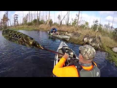 Okefenokee Swamp Fishing