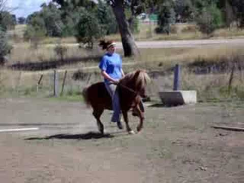 how to train pony to ride