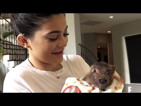 Kylie Jenner Relives AWKWARD Moment When She Mistook A Pig For A Chicken