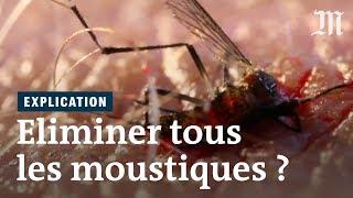 Y a-t-il une seule bonne raison de ne pas éliminer tous les moustiques ?