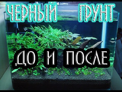 Грунт для аквариума с малавийскими цихлидами - YouTube