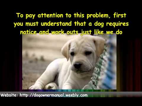dog-training---stop-dog-barking-habit-in-your-dog