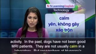 Anh Ngữ đặc Biệt: Dogs' Brains (voa-tech)