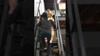 Man carries dog up stairs