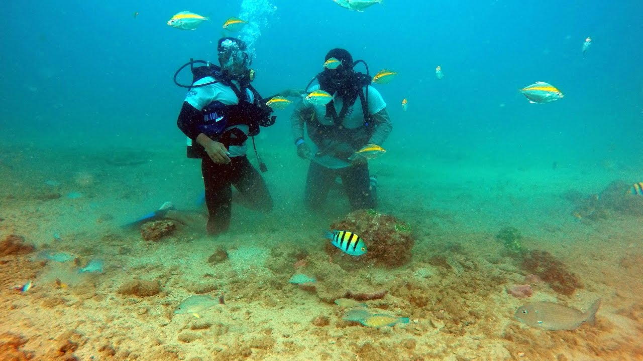 from Grant gay scuba diving clubs