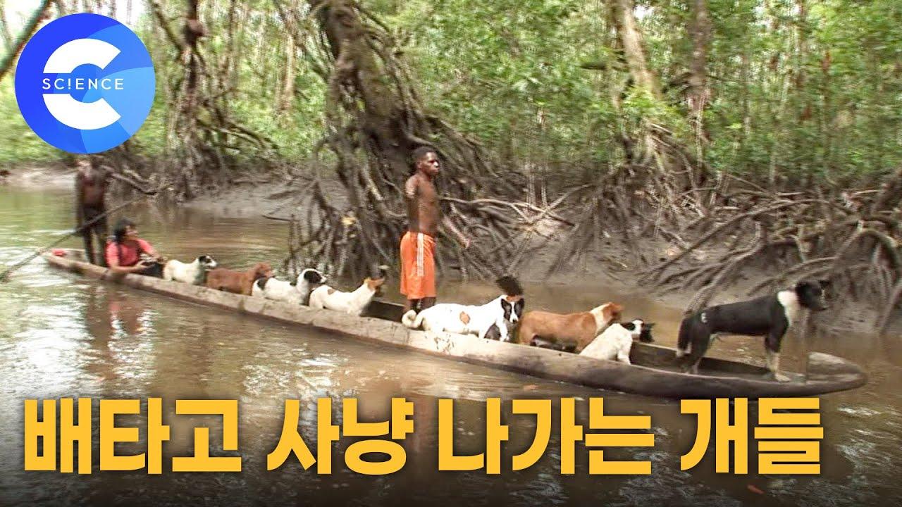 배를 타고 단체로 야생동물 사냥에 나가는 아스맛족 부족의 개들