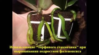 Почему производители засовывают мох и торф под основание орхидеи. Видео в защиту производителей! ))(, 2017-03-02T13:40:48.000Z)