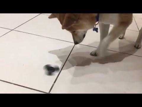 Best Fidget Spinner Tricks