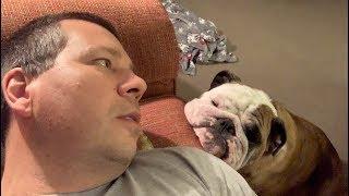 reuben-the-bulldog-enough-is-not-enough