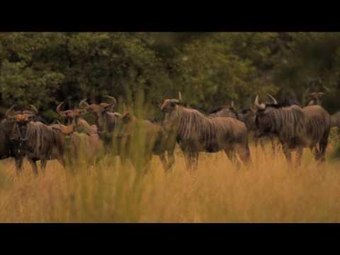 Limpopo : le tourisme (partie 7)