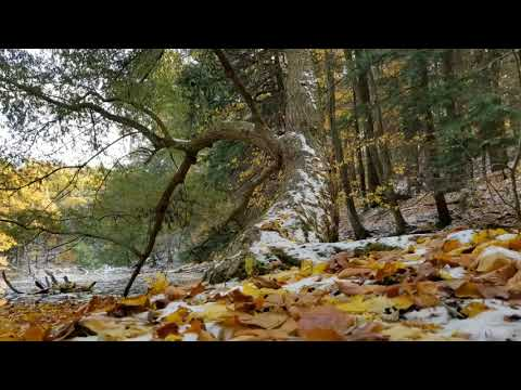 Durand Eastman Park Fall