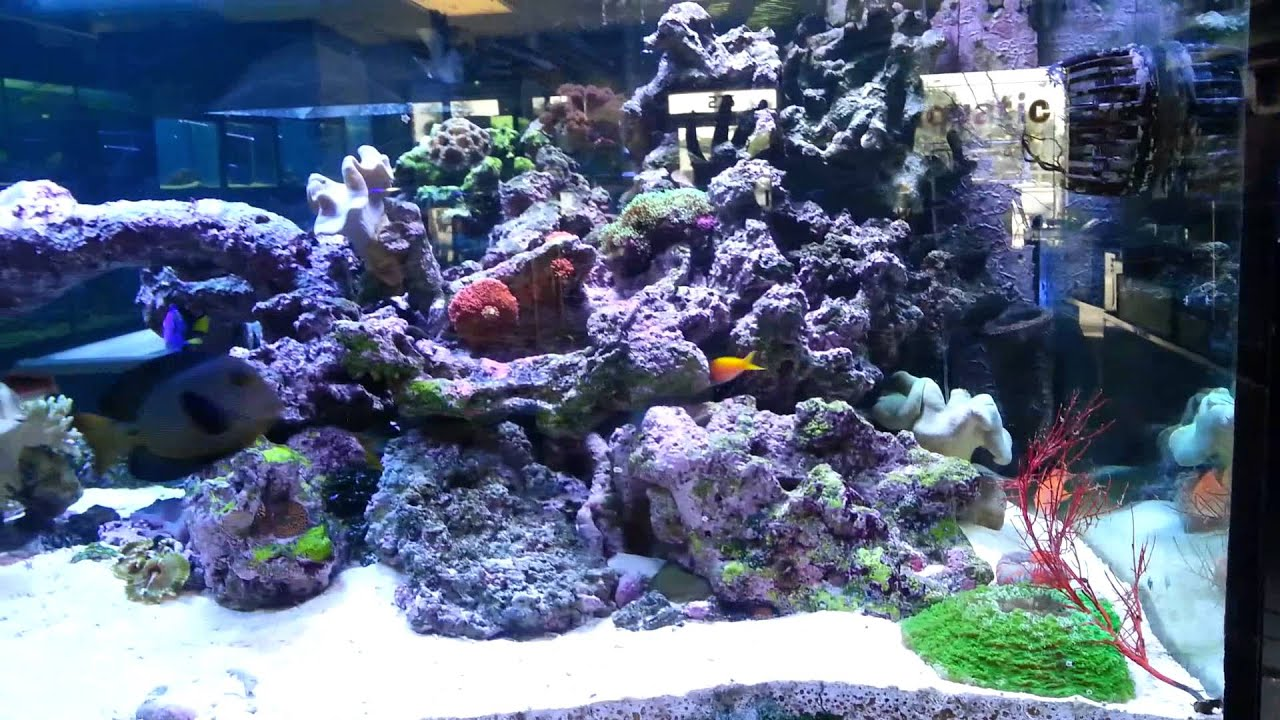 Saltwater fish tank myreefliving aquarium florida fish for Salt water fish store