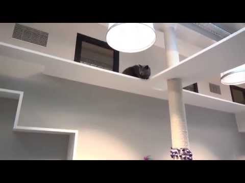 Un Hôtel Pour Les Chats à Paris