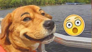 Подборка лучших приколов с собаками Funniest Dog Video Compilation
