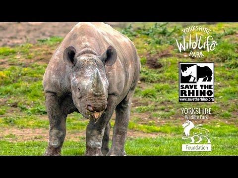 YWP Foundation Supporting 'Save the Rhino International' in Kenya