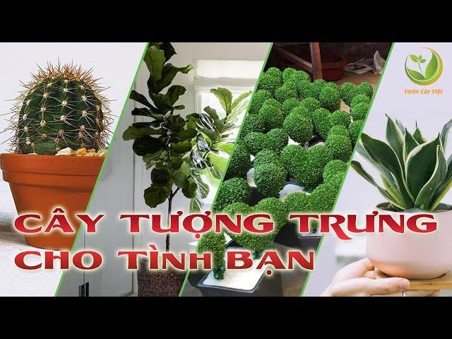 Top 4 cây cảnh tượng trưng cho tình bạn | Vườn Cây Việt