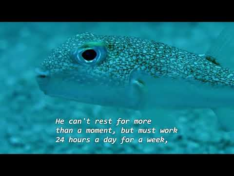 This Fish Has A Question For You And For Charles Darwin