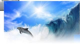 Ангел А Все дельфины в ураган