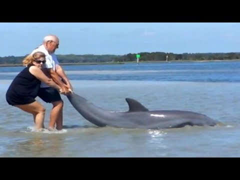 Amazing  Human Saves Six Dolphins Stranded | Recuse Animals