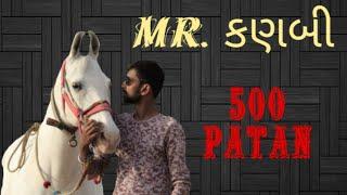 gujarat best horse, horse lover Mr. kanbi, 500 patan Mitul Patel karan Asav Farm, Kungher
