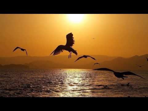 Ezio Bosso - Following a bird - (HD scenic)