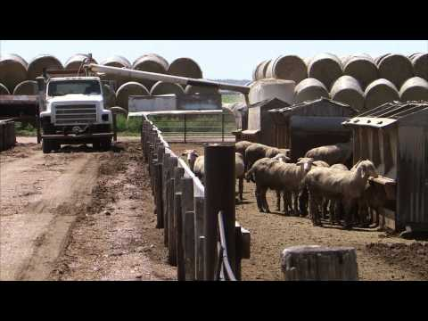 Alfalfa Harvest - America's Heartland