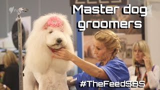 Download Master dog groomers Australia - The Feed Mp3 and Videos