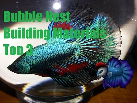 Things You Can Use For Your Betta Building A Bubble Nest