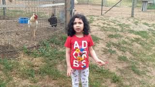 Family Fun time at Farm- Kids Watching Farm Animals