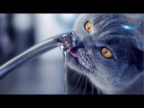 Телеканал Броди online: 11 грудня у Бродах можливі перебої з водопостачанням (ТК