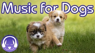 Calm My Dog Music Therapy! NEW Reggae Music for Dogs 2018!