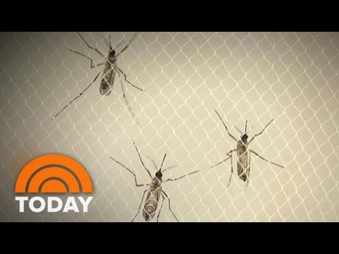 Zika In Miami: Health Officials Combat First Outbreak In US | TODAY