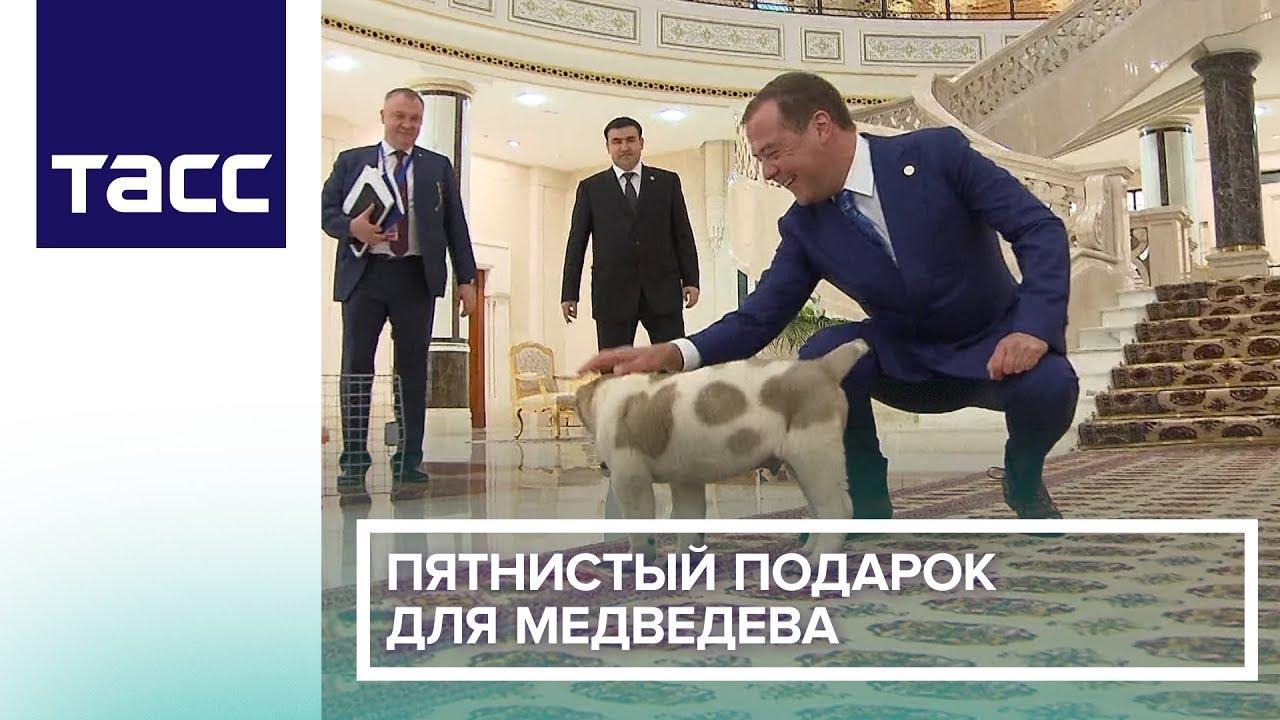Президент Туркмении подарил Медведеву щенка пятнистого алабая