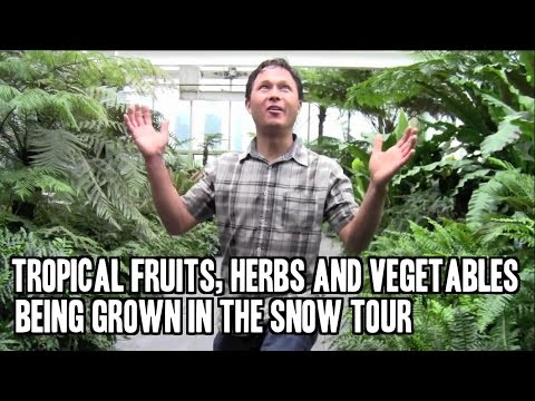 Grow Tropical Edible Herbs, Fruits and Vegetables Where it Snows!