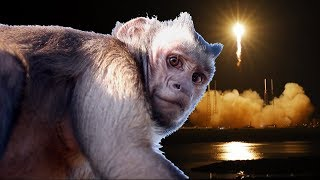 SpaceX Rocket Launch LIVE with Capuchin MonkeyBoo!