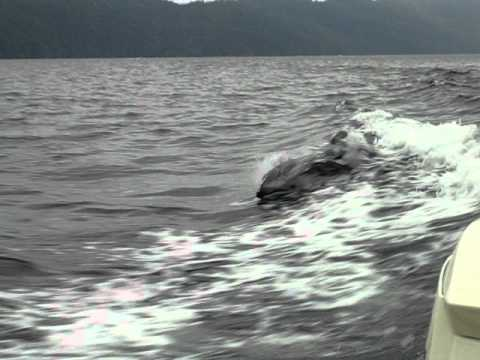 West Canada, Telegraph Cove, Dolphins 1