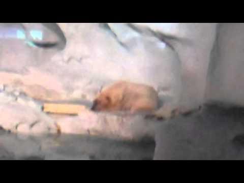 Seaworld Wild Arctic Polar Bears Part 2