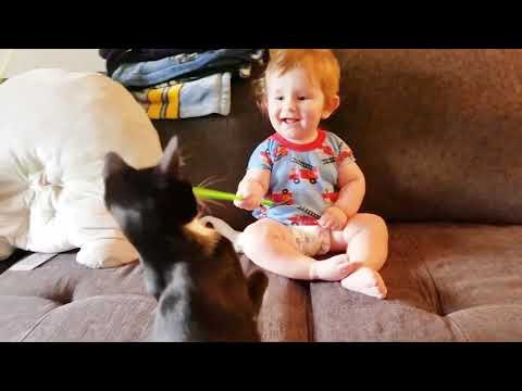 Baby And Cat Fun And Cute #3 - Funny Baby Videos