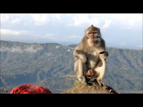 Monkey knows how to eat Oreo