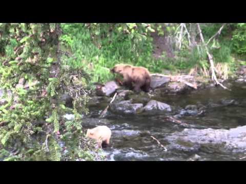 2014 Russian River Falls Salmon and Bears