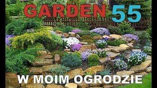 GARDEN 55 - Kwiaty w moim ogrodzie - Kot ogrodnik