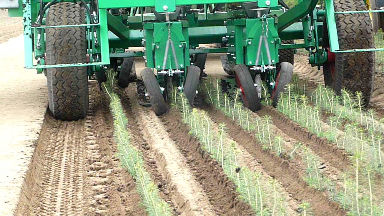 Automatic Transplanter For Pine Tree Youtube