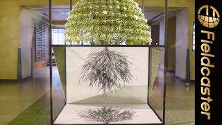 一本の茎から千輪の花を咲かせる千輪咲がすごい!「千輪咲~ひとつながりの驚異」