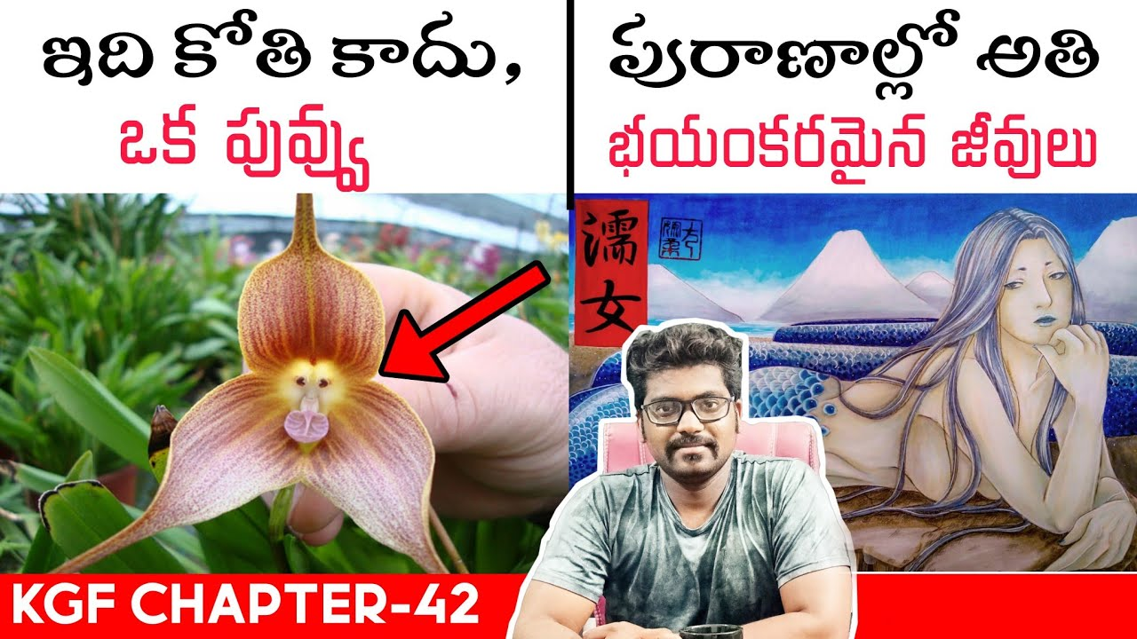 Top Amazing And Unknown Facts In Telugu | Telugu Facts | Kranthi Vlogger | KGF-42